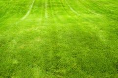 frodig grön lawn arkivbilder