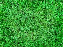 frodig grön lawn royaltyfria foton