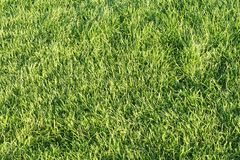 frodig grön lawn för gräs arkivbild