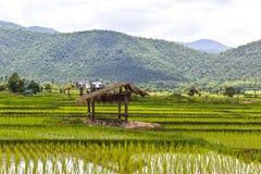 Frodig grön risfält och solnedgång Arkivbild