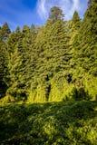 Frodig grön tillväxt arkivfoton