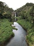 Frodig grön vattenfallström royaltyfri fotografi