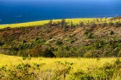 Frodig grönska av den Kauai ön Arkivbild
