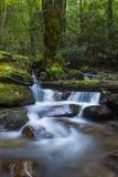 Frodig kaskad i skog Royaltyfri Foto