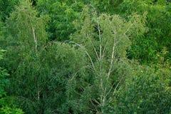 Frodig lövverk av trädbruk för bakgrund Arkivbilder