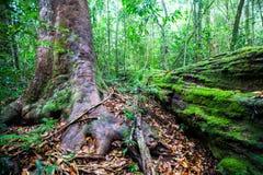 Frodig lövverk i regnskog Fotografering för Bildbyråer