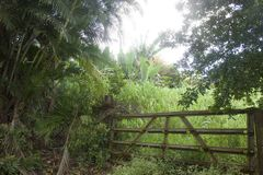 Frodig lövverk längs vägen till Hana i Maui, Hawaii arkivbilder