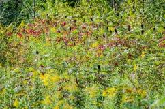 Frodig lövverk och vegetation i en midwest skog på slutet av sommar, med tecken av nedgången, som några sidor börjar att ändra royaltyfri foto