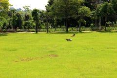 frodig lawn Royaltyfri Foto