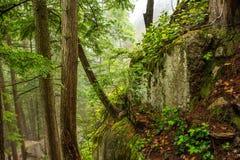 Frodig Rainforest i British Columbia Fotografering för Bildbyråer