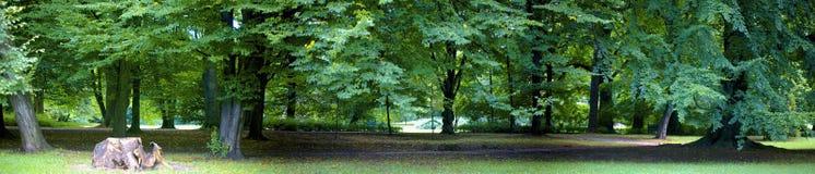 frodig skog Royaltyfri Fotografi