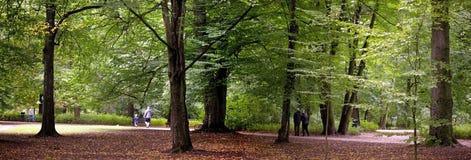 frodig skog Arkivbilder