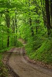 frodig skog Arkivbild