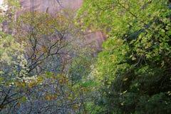 Frodig skog längs den mellersta gaffeln av Taylor Creek, fingerkanjoner av Koloben, Zion National Park, Utah Arkivbild