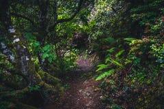 Frodig skog som fotvandrar banan royaltyfri fotografi
