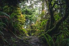 Frodig skog som fotvandrar banan royaltyfri foto