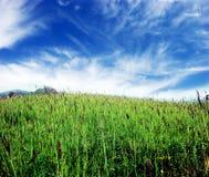 frodig sky för gräs Royaltyfria Bilder