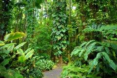 Frodig tropisk vegetation av Hawaii den tropiska botaniska trädgården av den stora ön av Hawaii Royaltyfri Fotografi