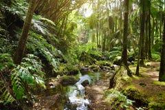 Frodig tropisk vegetation av Hawaii den tropiska botaniska trädgården av den stora ön av Hawaii Arkivbild