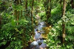 Frodig tropisk vegetation av Hawaii den tropiska botaniska trädgården av den stora ön av Hawaii Royaltyfria Bilder