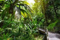 Frodig tropisk vegetation av Hawaii den tropiska botaniska trädgården av den stora ön av Hawaii Fotografering för Bildbyråer