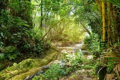Frodig tropisk vegetation av Hawaii den tropiska botaniska trädgården av den stora ön av Hawaii Royaltyfri Foto