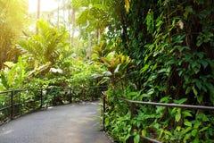 Frodig tropisk vegetation av Hawaii den tropiska botaniska trädgården av den stora ön av Hawaii Arkivbilder