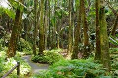 Frodig tropisk vegetation av Hawaii den tropiska botaniska trädgården av den stora ön av Hawaii Royaltyfria Foton