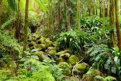 Frodig tropisk vegetation av Hawaii den tropiska botaniska trädgården av den stora ön av Hawaii Royaltyfri Bild