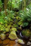 Frodig tropisk vegetation av Hawaii den tropiska botaniska trädgården av den stora ön av Hawaii Arkivfoto