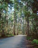 Frodig vår Forest Landscape Arkivfoto