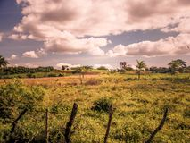Frodig vegetation i lantlig Kuba Arkivbilder