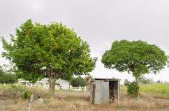 Frodiga ackee- och mangoträd arkivfoto