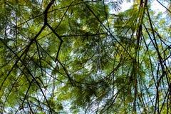 Frodiga filialer för ett träd royaltyfri bild