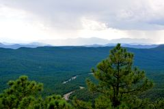 Frodiga gröna skogar Arkivbilder