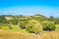 Frodiga gröna träd och gräs på lutningarna av Rolling Hills royaltyfri bild