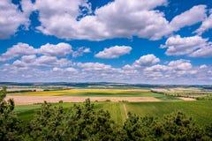 Frodiga gröna vingårdar under stora moln royaltyfri bild