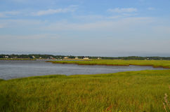 Frodiga Marsh Grass Bordering Duxbury Bay Arkivbild