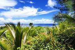 Frodiga palmträd på en tropisk ö Royaltyfri Bild