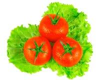 Frodiga tomater med gröna leafs. Isolerat Fotografering för Bildbyråer