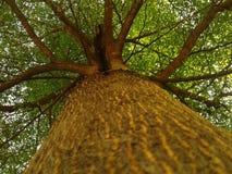 Frodiga träd royaltyfri bild