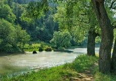 Frodiga träd på banken av en grund flod Royaltyfri Foto