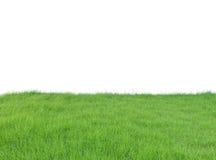 Frodigt fält för grönt gräs som isoleras på vit bakgrund, snabbt PA Arkivbild