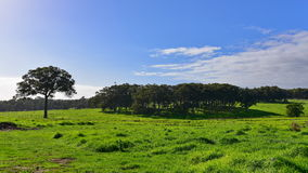 Frodigt fältlandskap i västra Australien Fotografering för Bildbyråer