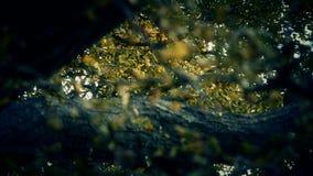 Frodigt ginkgoträd i bris, höst, skog, trän arkivfilmer
