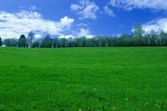 frodigt gräs Royaltyfri Fotografi