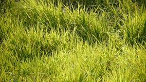 Frodigt gräs i solen arkivfilmer