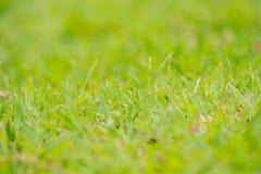 Frodigt gräs och blommor gör klar Arkivfoton