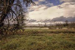 Frodigt grönt fält på Sunsetn royaltyfri bild