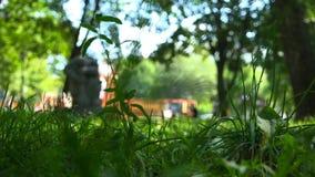 Frodigt grönt gräs i staden parkerar i förgrunden arkivfilmer
